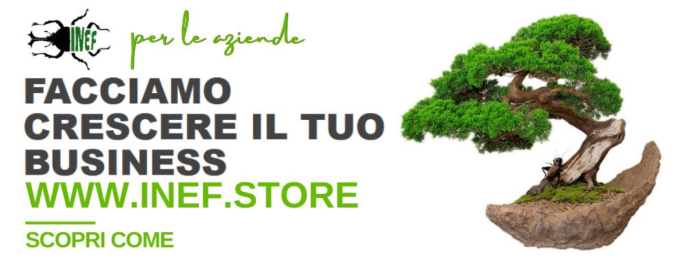 Inef Store